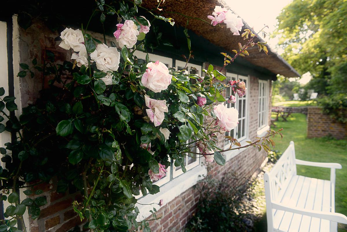 Christel Seyfarth Fanø roser