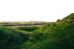 Christel Seyfarth Fanø eng