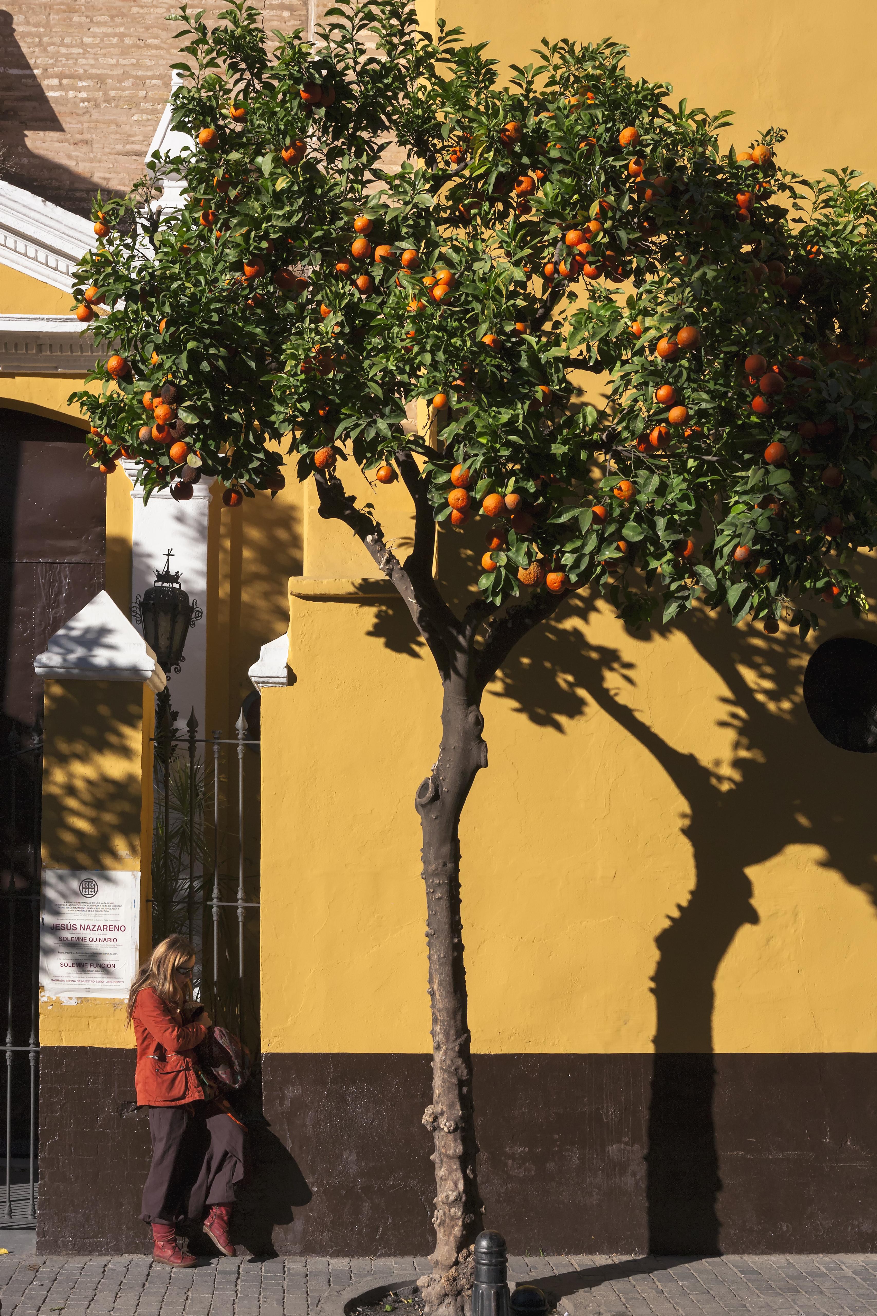 C14 Plaza de San Martin, Sevilla