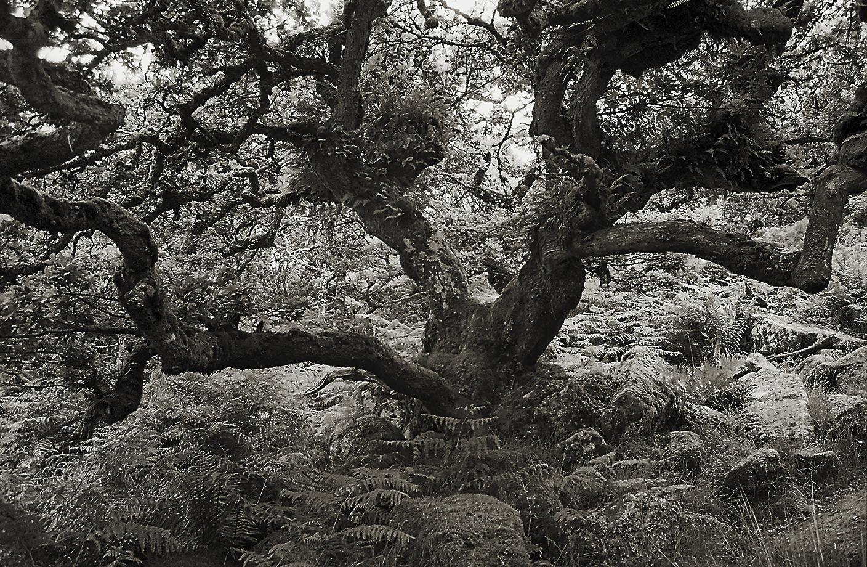 M3 Wistman's Wood