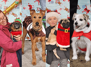 Dog-Christmas-Festival-Doggy-Day-Out-Events.png