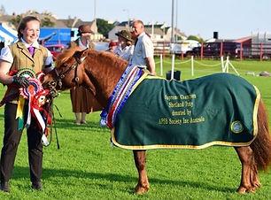 Shetland breed show.jpg