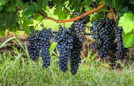 Wine Tours, Dripping Springs