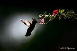 Photo_signature_Rémi_Garcia