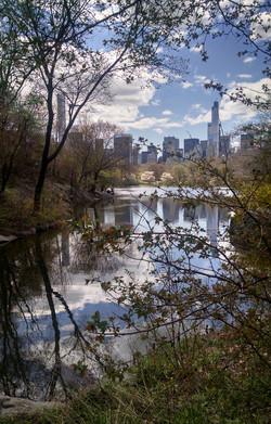 Central Park Reflection