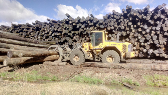 Using the FSC system to assess illegal logging risk for non-certified products