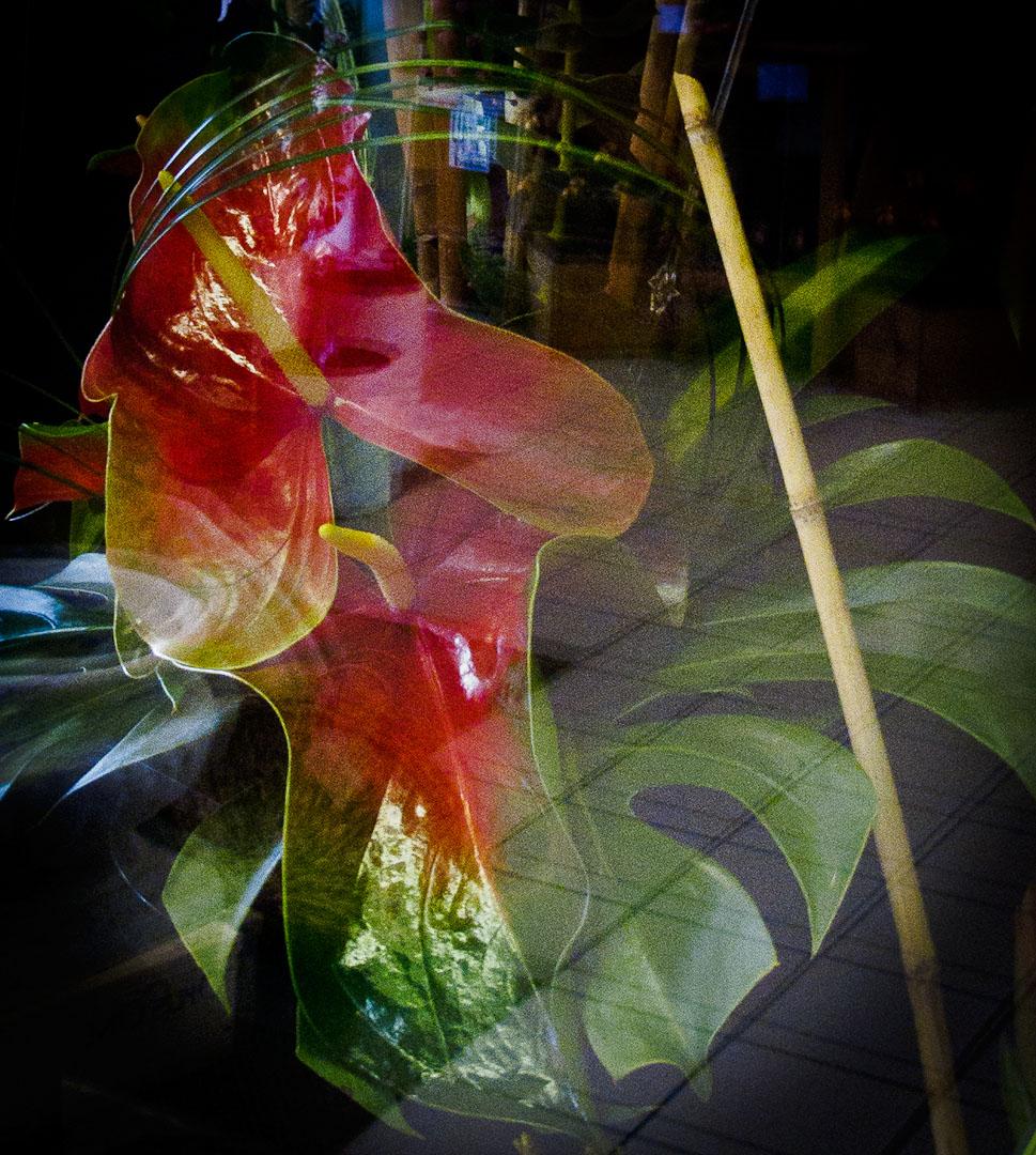 Flower Shop Hawaii Reflection