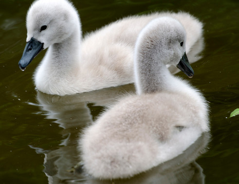 Feathery babies