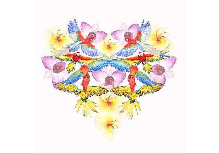 Samsung parrot and flower heart illustration