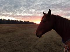 Maggie sunset.jpg