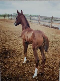 Lippy foal.jpg