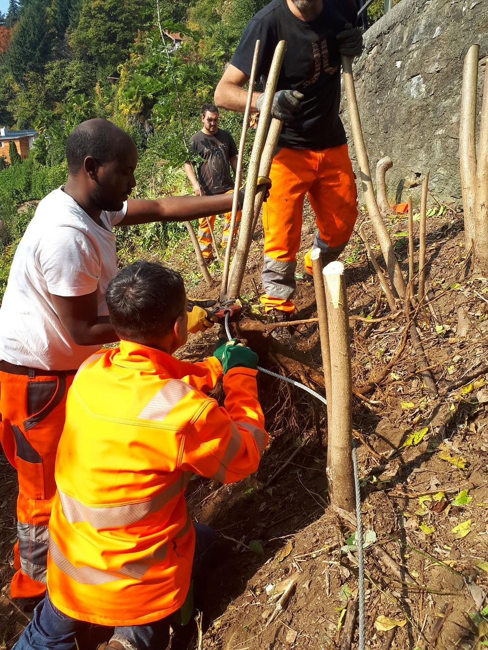 Operai impegnati nell'estirpazione della pianta tramite Trifor