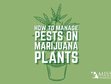 Missouri Marijuana Card Answers: How to Manage Pests on Your Cannabis Plants