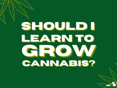 Is it Legal to Grow Cannabis in Virginia?