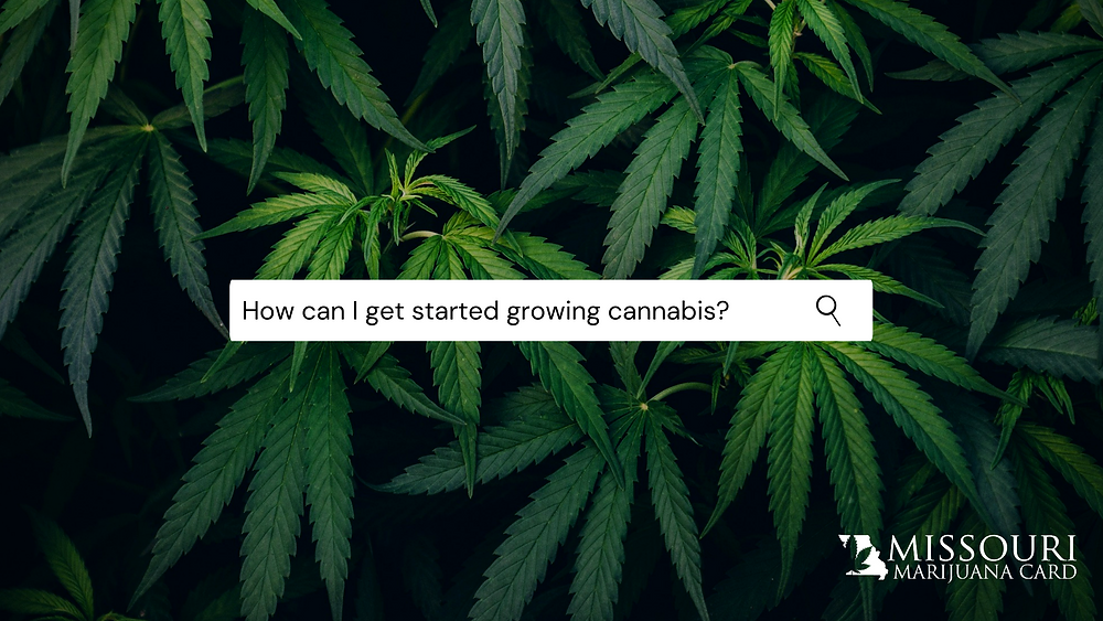 Medical marijuana how can I get started growing cannabis?