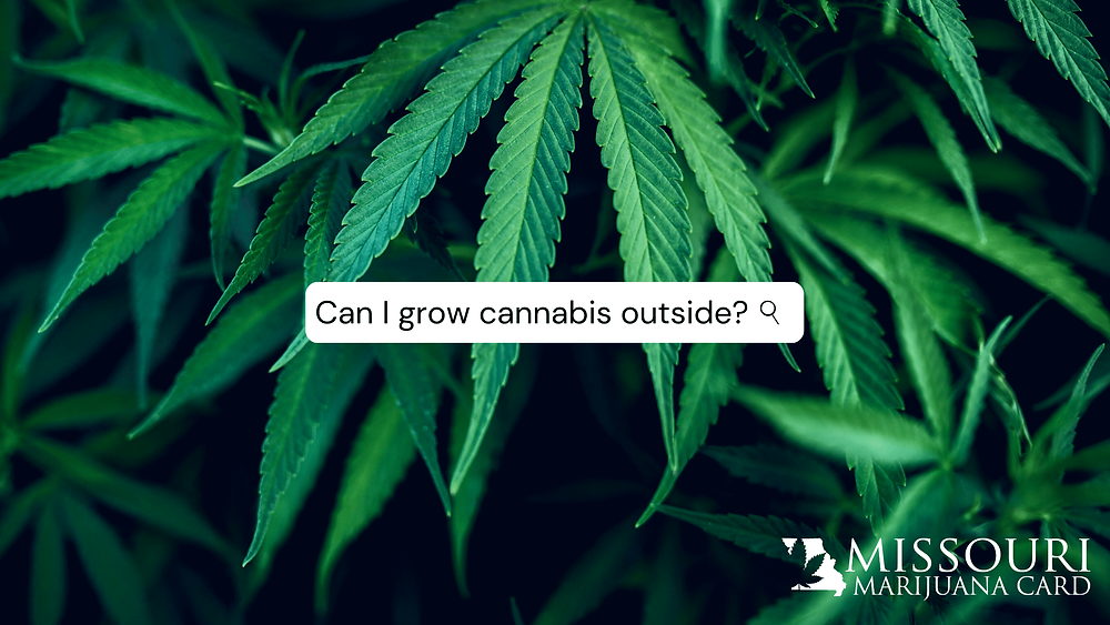 Can I grow cannabis outside in Missouri?