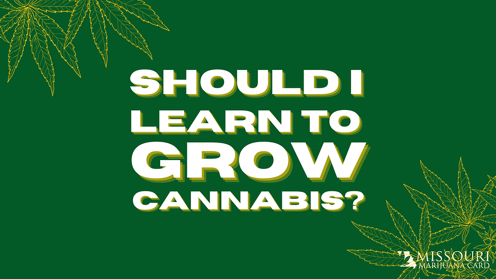 Should You Learn to Grow Cannabis in Missouri