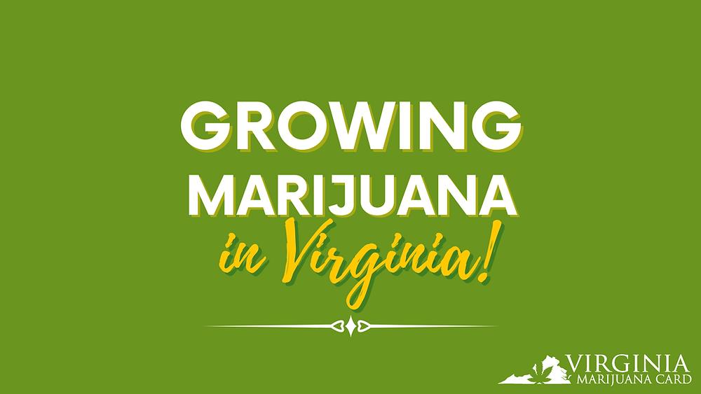 Growing Marijuana in Virginia