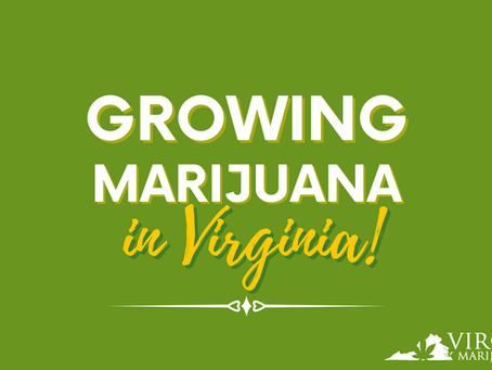 Getting Started Growing Marijuana in Virginia (Yes, It's About to be Legal)