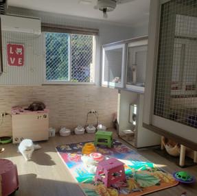 Gatil-melhor-dinigre-instalação-limpeza-comida05.jpeg
