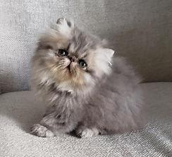 gato-gatil-rj-filhote-melhor.jpg