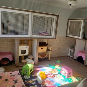 Gatil-melhor-dinigre-instalação-limpeza-comida02.jpeg
