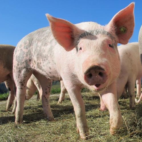 Whole Pasture Raised Pork Deposit