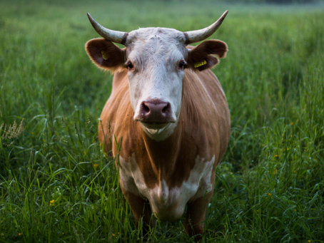 Sale on Grass Fed Beef