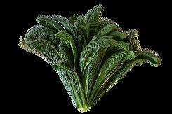 Tuscan Kale crop.png