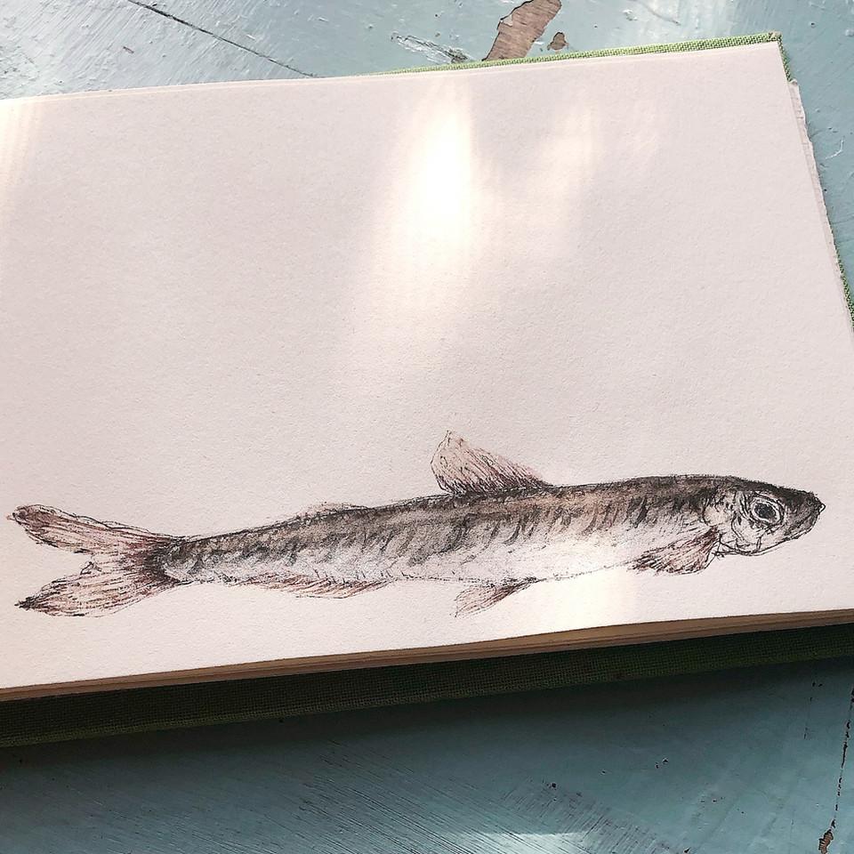 Fische- div. Motive- Originalzeichnungen oder Drucke- Größe und Preis auf Anfrage