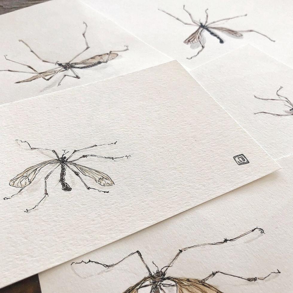 Insekten- Skizzen- Auftragsarbeit- div. Motive
