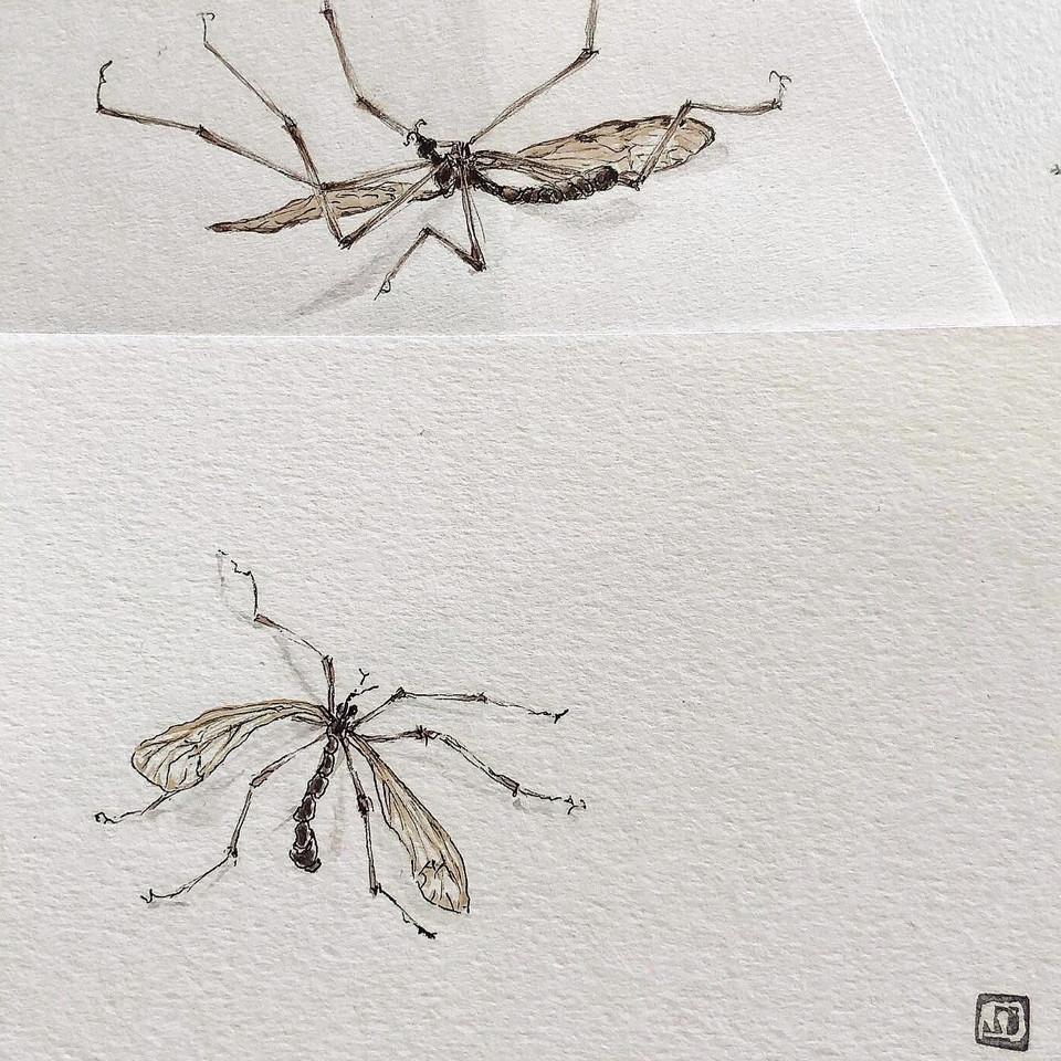 Insekt- kleine Skizzen ca. 10x15 cm- Originale-Unikate- 65,- Euro