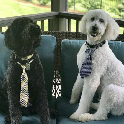 Medium print neckties (Set of 5)