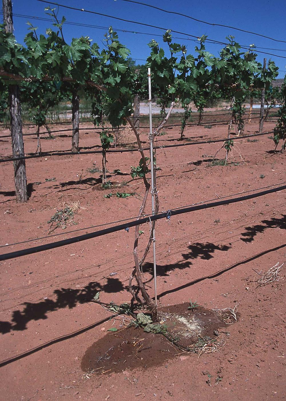 irrigazione a goccia expo israele