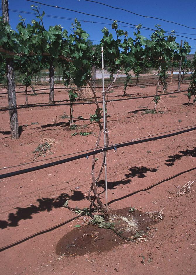 Irrigazione a goccia #expo2015