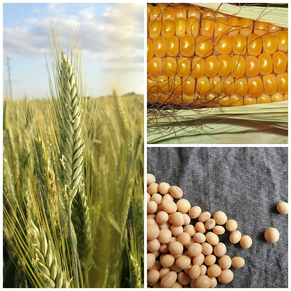 biologico-agromeccanica-facchini-bio-convenzionale-report (1).jpg
