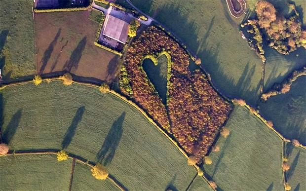crea-foresta-a-forma-di-cuore.jpg