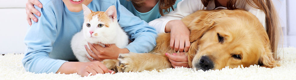 Pet Urine Treatments