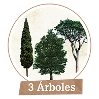 Plantar 3 árboles