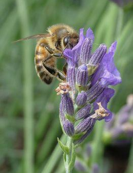 Learn More: Reed Channel Farm's plantings for Healthy Bees