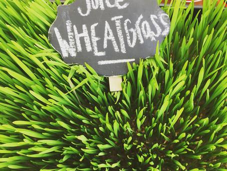 Summer Wheatgrass Tea