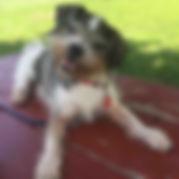Claude Monet Dog.jpg