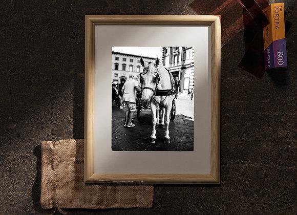 Il Cavallo Bianco (11x14 Frame / 8x10 Print)