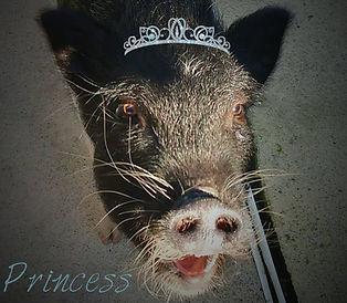 Princess Penny.jpg