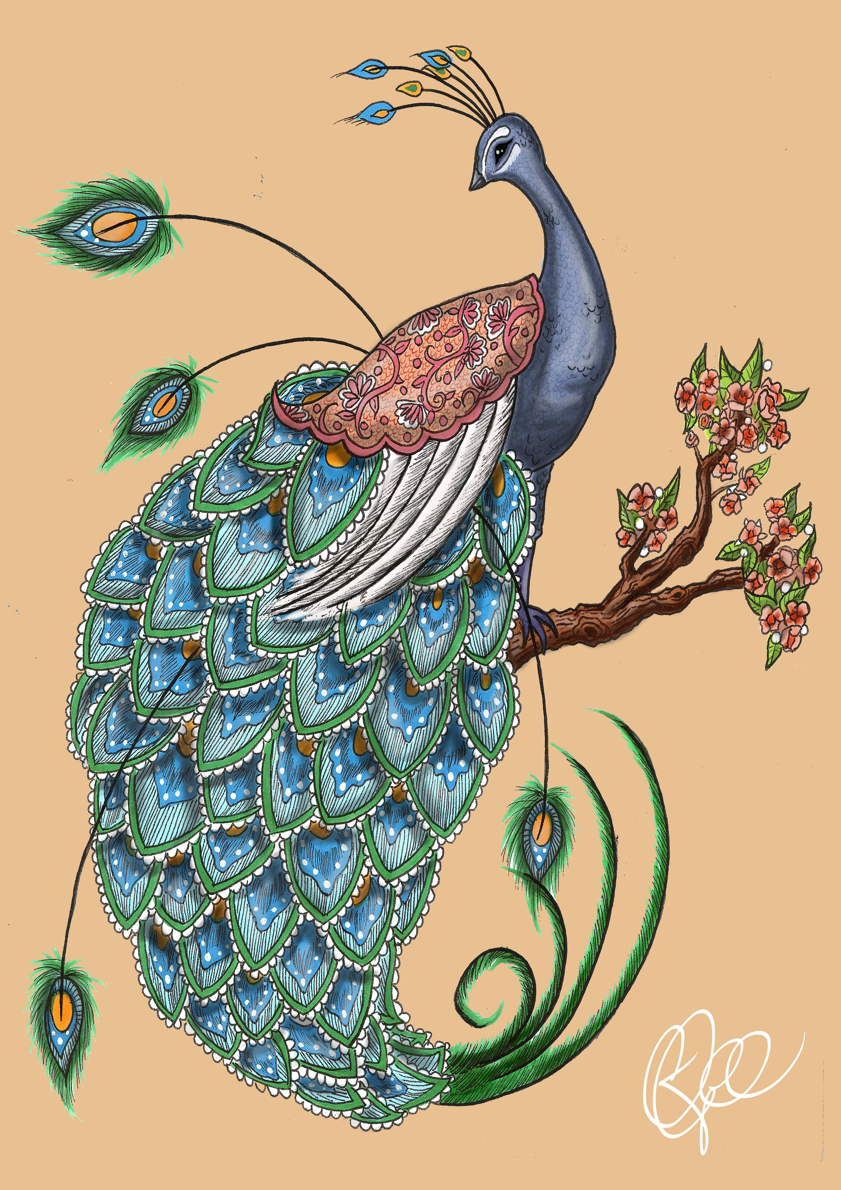 FRONT COVER - Peacock