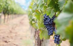 winery  copy.jpg