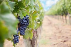 winery .jpg