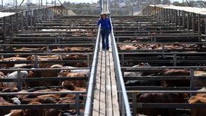 Agricultural sector could be net zero by 2040