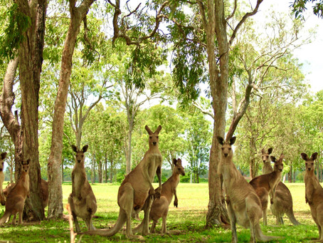 Victoria's Wildlife Act – it's time for some changes