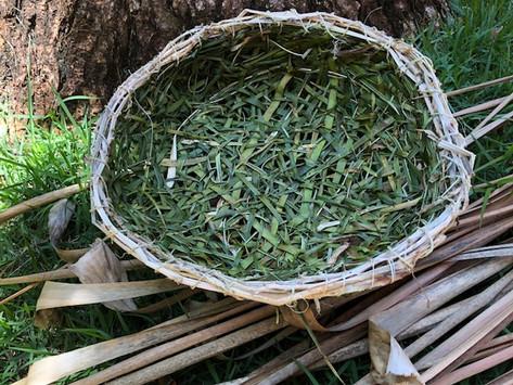 Basket Making in Brazil